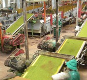 tea_processing_plant_mbeya